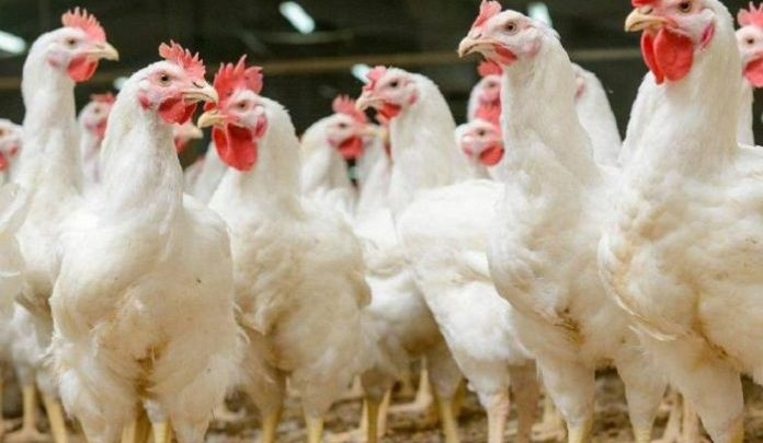 Read: US Poultry and Egg Promotion Council in perspective 1